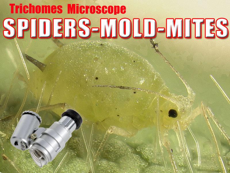 Magnifier Microscope